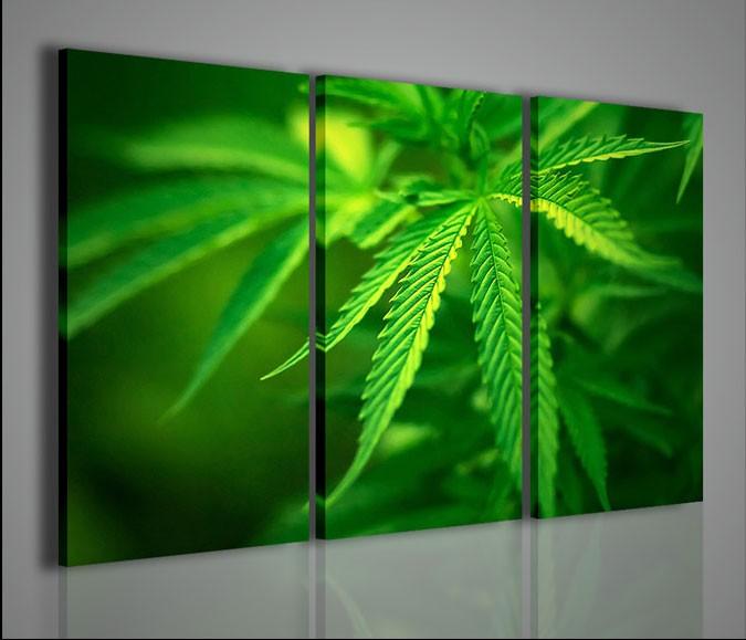 Quadri moderni quadri fiori e piante cannabis foliage for Piante arredamento moderno