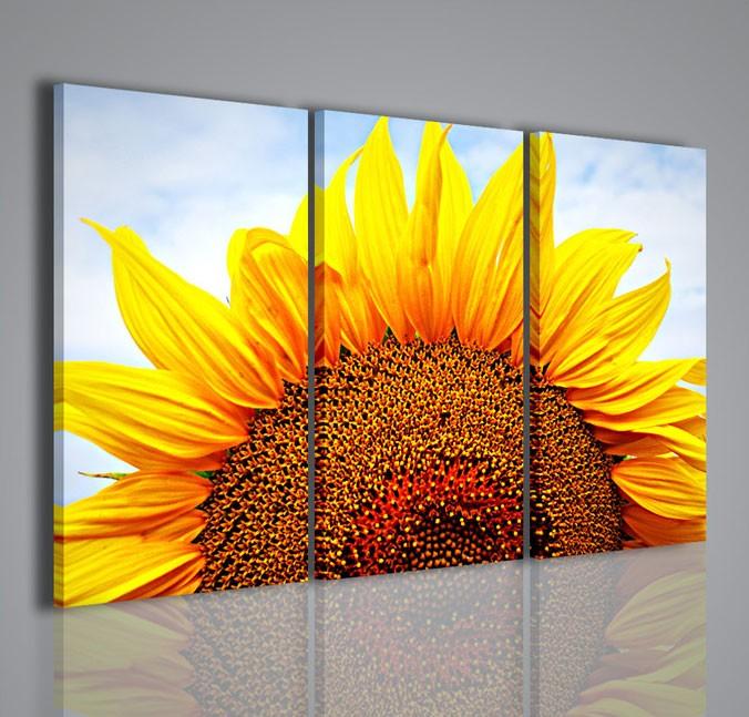Quadri Moderni-Quadri Fiori e Piante-Sunflower VII | QUADRI ...
