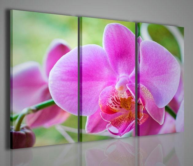 Quadri Moderni-Quadri Fiori e Piante-Orchidea | QUADRI MODERNI SU TELA
