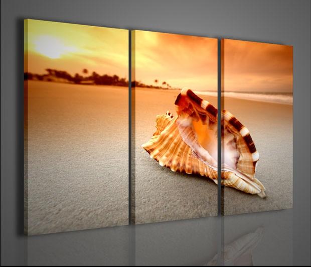Quadri moderni quadri alternativi shell on the sea - Quadri arredo casa ...