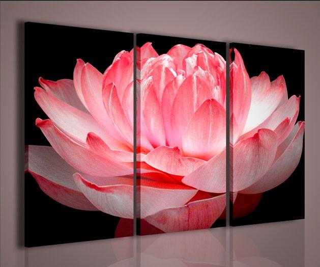 Quadri Moderni-Quadri Fiori e Piante-Lotus Flower | QUADRI MODERNI ...